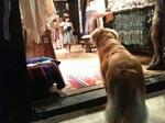 dog&girl.JPG
